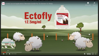 Bimeda Launches New Training Animation For Ectolfy 12.5mg/ml Pour On Solution For Sheep