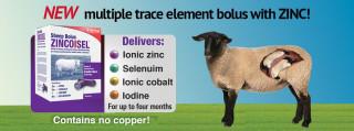 Bimeda Announces Launch of ZincoIsel Sheep – A Trace Element Bolus Containing Zinc, Selenium, Iodine and Cobalt